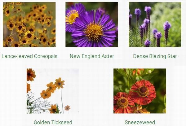 保护环境,Bees Matter 免费赠送花种!