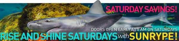 Ripley's Aquarium水族馆每周六 8点-10点入场以及每晚7点以后入场均享受门票5元优惠