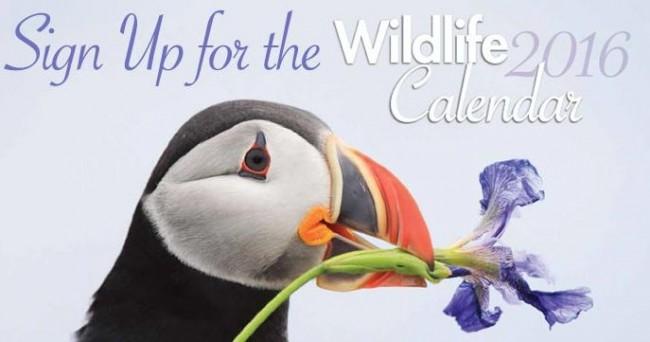 Wildlife 2016 Calendar免费挂历