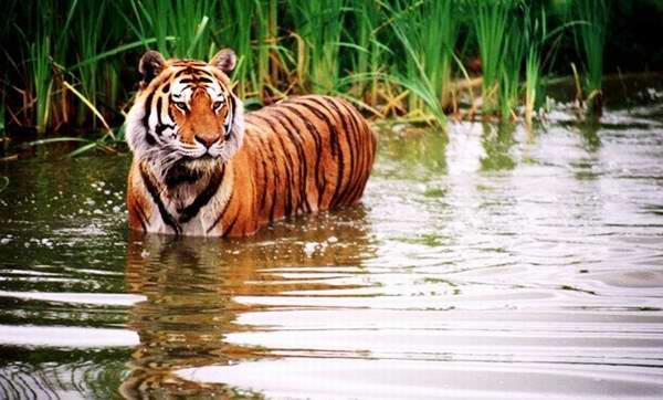 Jungle Cat 丛林猫世界野生动物园单人单日门票6.5元!新用户家庭年票3.4折 32元限时特卖!