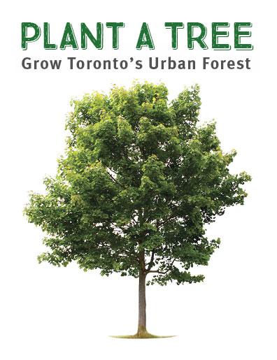 春天到了,快申请多伦多市府免费种树,每周六免费送堆肥土壤!