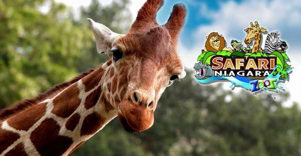 好价额外7.5折!Safari Niagara 尼亚加拉野生动物园门票4.9折 17.21加元!仅限今日!