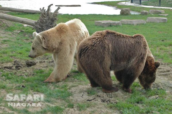Safari Niagara 尼亚加拉野生动物园门票5.2折 18.36加元!