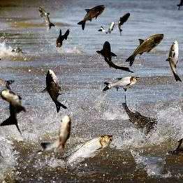 又到一年钓鱼季!安省7月1日起免费钓鱼!7大公园免费学钓鱼!内附钓鱼秘籍和钓点!