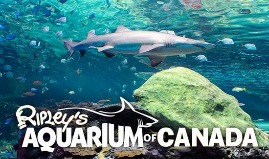 Ripley's Aquarium 多伦多水族馆 周年庆,门票6折!10月过生日门票5折,10月16日过生日门票全免!