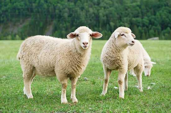 Down Under Queen/King 可水洗 新西兰纯羊毛被 91.99-142.99加元限量特卖并包邮!其中Queen售价117.49加元!