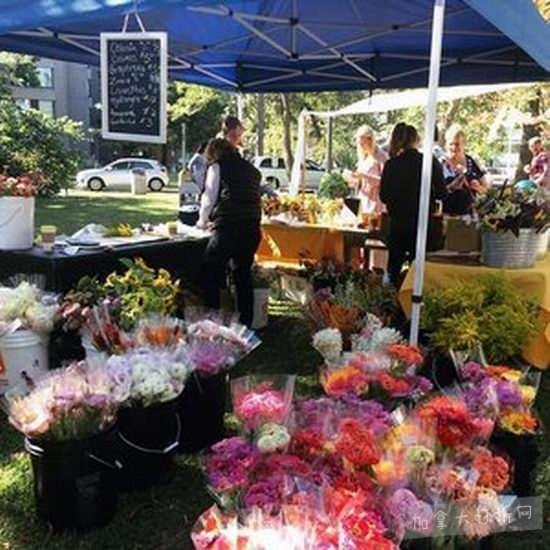 逛Toronto Flower Market多伦多情人节花市 让情人节的花也变得与众不同