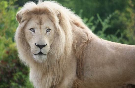 Toronto Zoo 多伦多动物园 44周年庆!整个8月,门票7.5折!