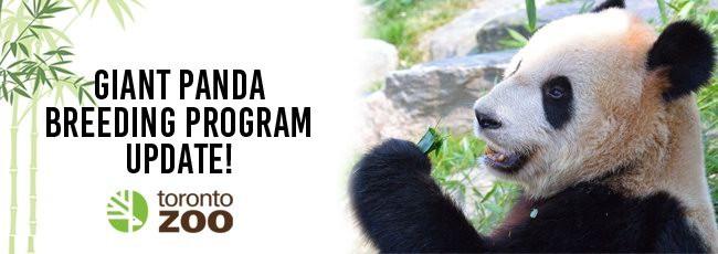 """大熊猫""""二顺""""当妈了,快来看看它的生产视频!"""