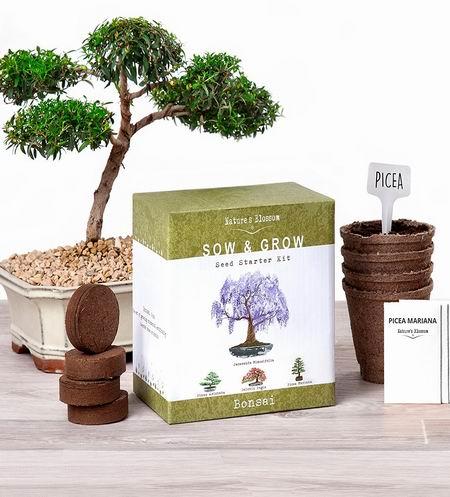 历史新低!Nature's Blossom 盆景树种子(4包)+种植土套装 14.38加元限量特卖!
