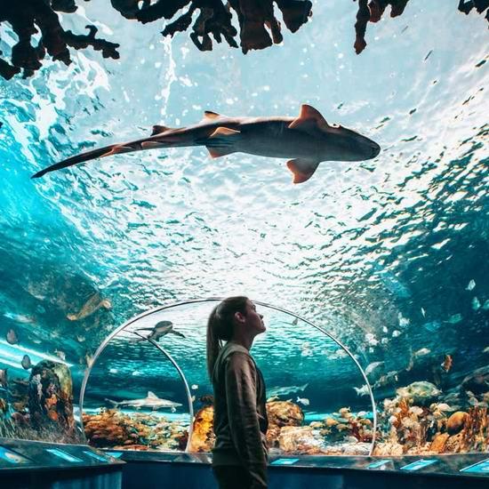 Ripley's Aquarium 多伦多水族馆门票5折!仅限今日!