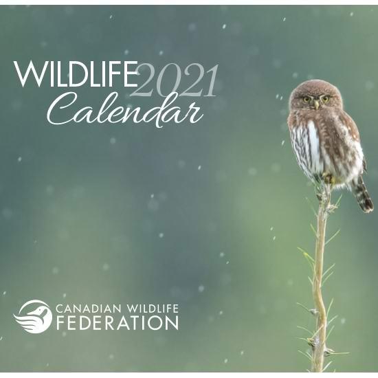 加拿大野生动物保护协会 免费赠送2021年野生动物台历!