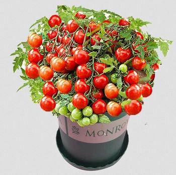 Amazon精选大量中国蔬菜、水果、花卉种子热卖中!拒绝农残,吃上新鲜家乡菜!入超值装!