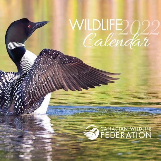 加拿大野生动物保护协会 免费赠送2022年野生动物月历!